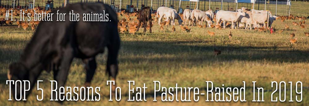 The #1 reason to eat pasture-raised in 2019. It is better for the animals.