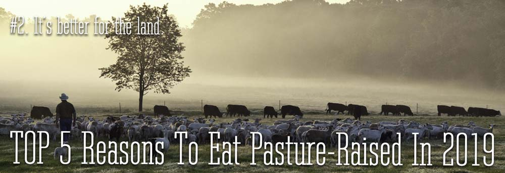 The #2 reason to eat pasture-raised in 2019. It is better for the land.