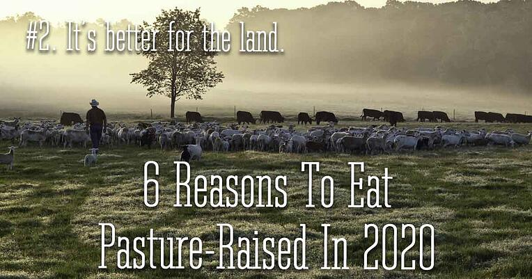 2-pasture-raised-better-for-land_1200