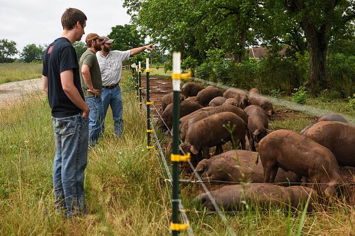 Aaron and Dan discuss Iberian pastures