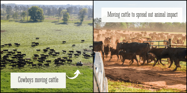 Biomimicry regenerative agriculture grazing rotation