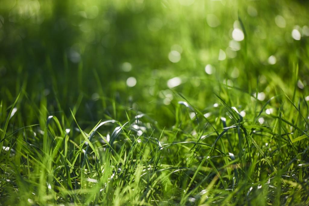 Grass at White Oak Pastures