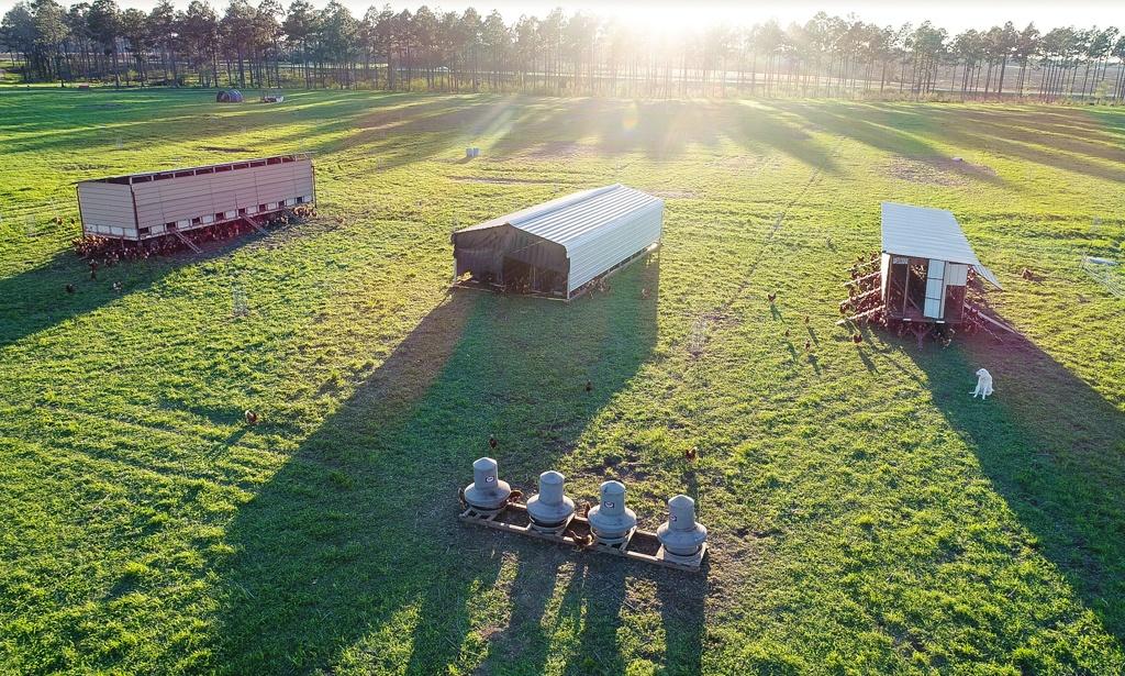 Drone Pasture-Raised Chickens