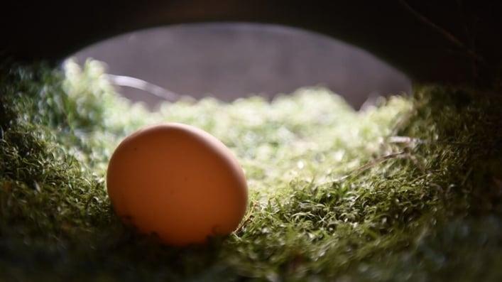Egg unwashed pasture raised