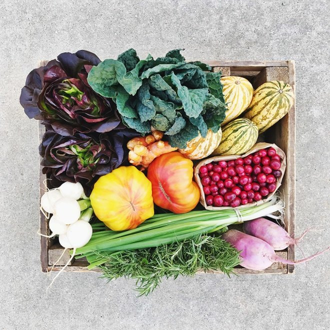 Fresh Harvest Vegetable Basket lettuce carrots squash kale raddish leeks rosemary tomato cranberry.jpg