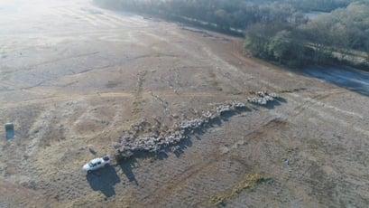 Graham Phillips White Oak Pastures aerial multi species herd rotation