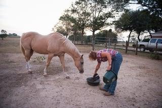 guided horseback riding on our regenerative farm.jpg