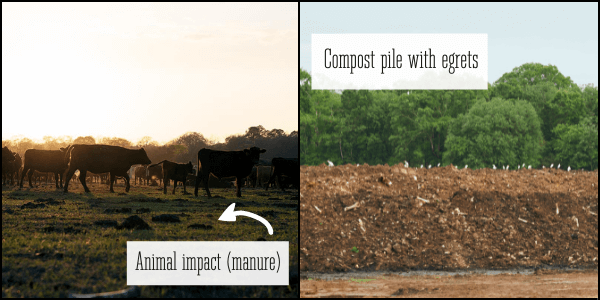 Microbial cycle manure compost