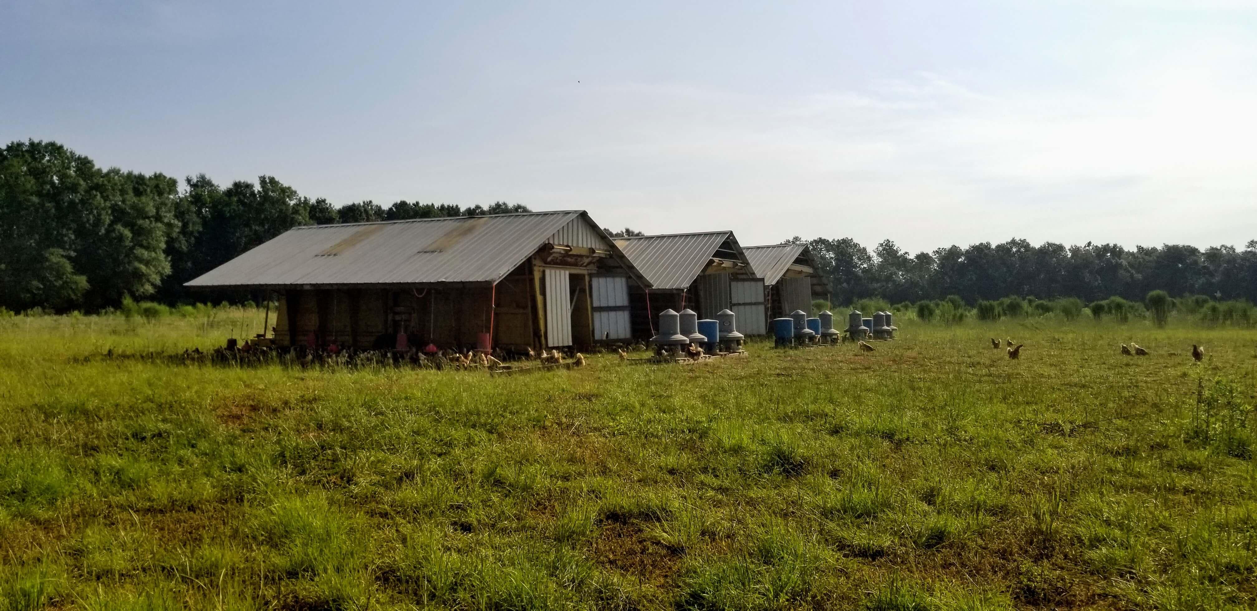 Mobile hen houses pasture raised chicken