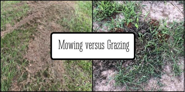 Mowing vs grazing (1)