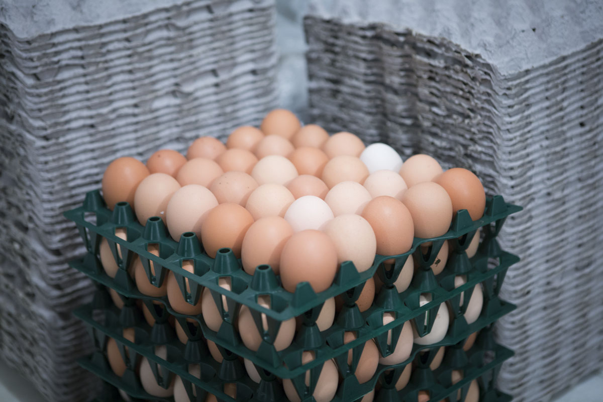 Product Eggs Chicken 5-22-15 Crate
