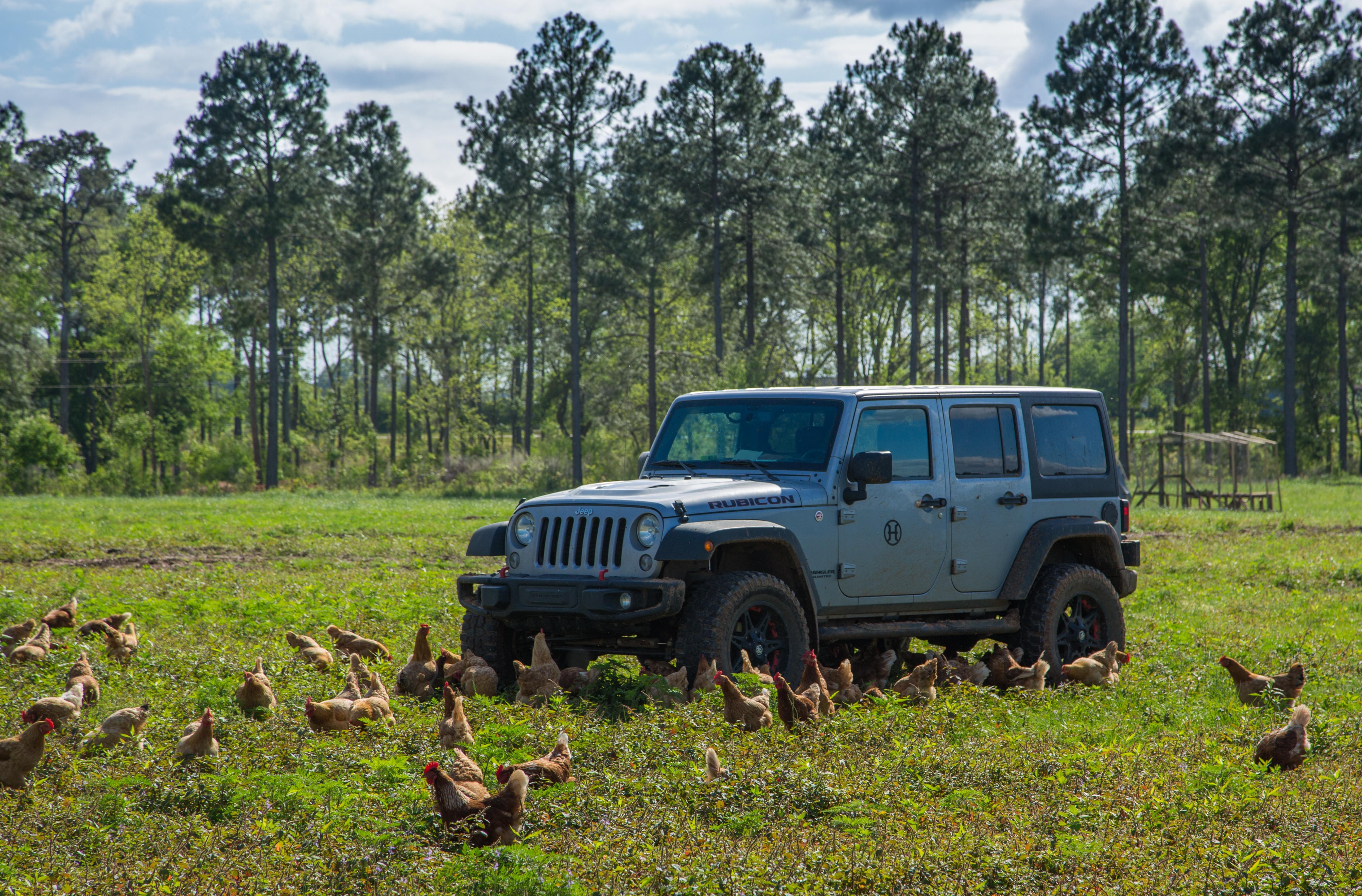 Production Laying Hens Indigo 4-25-16 Grazing Free Range Vehicle