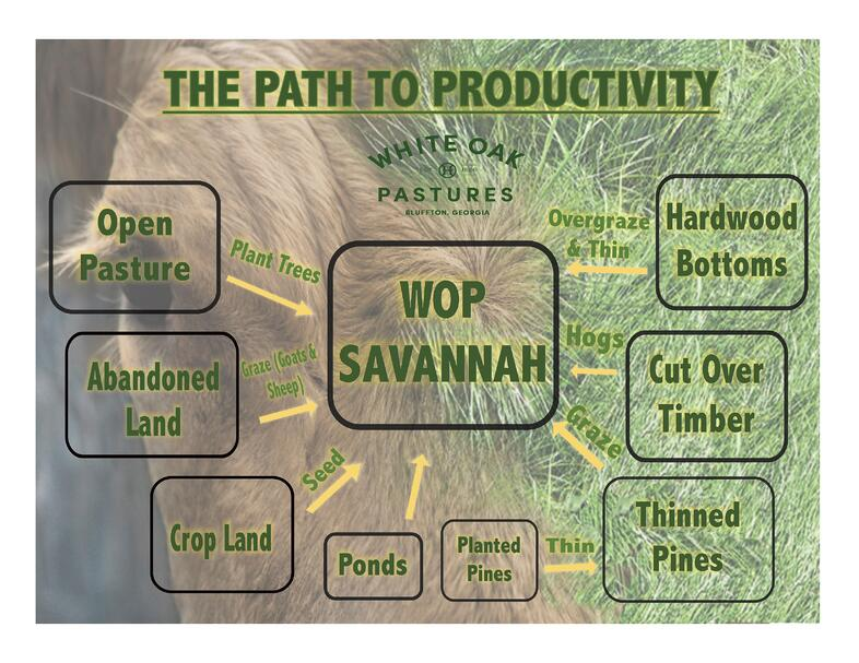 Regenerative Agriculture Path To Productivity