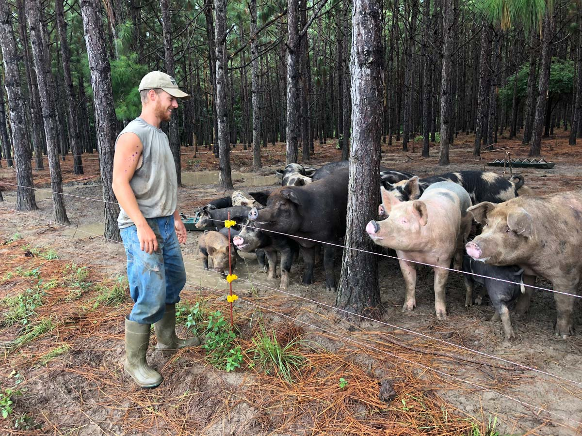 Intern Clint Shannon tends heritage breed hogs at White Oak Pastures