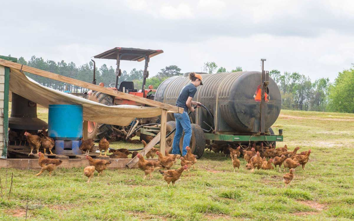 WOP-Nichole-Griffin-poultry
