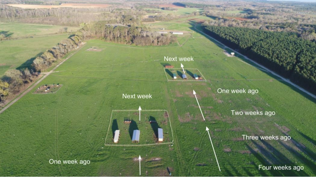 Aerial photography shows pastured poultry management rotation