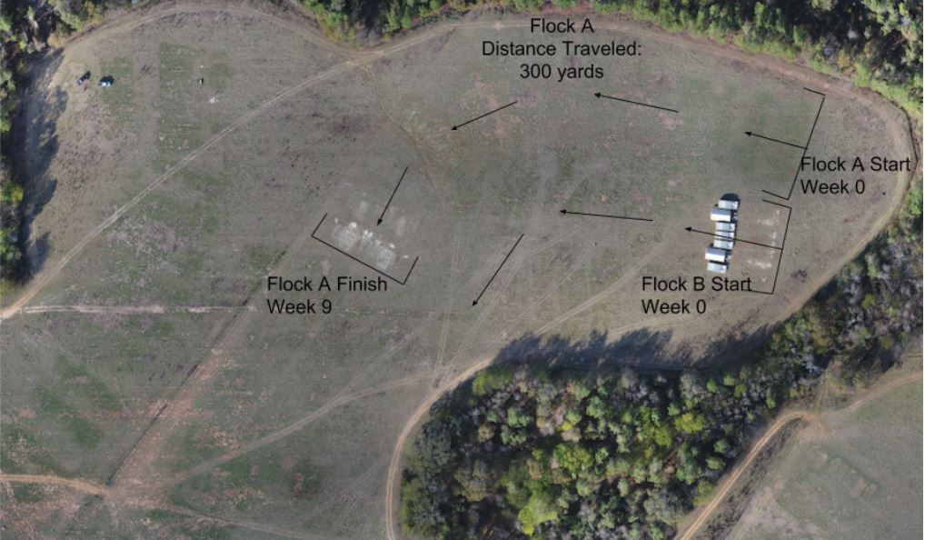 WOP-pastured-poultry-management-aerial