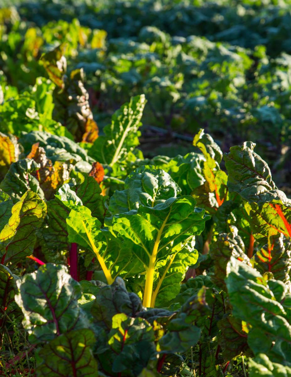 WOP-vegetables