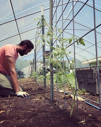 White Oak Pastures Garden manage Bilal Barwari practices organic no-till farming