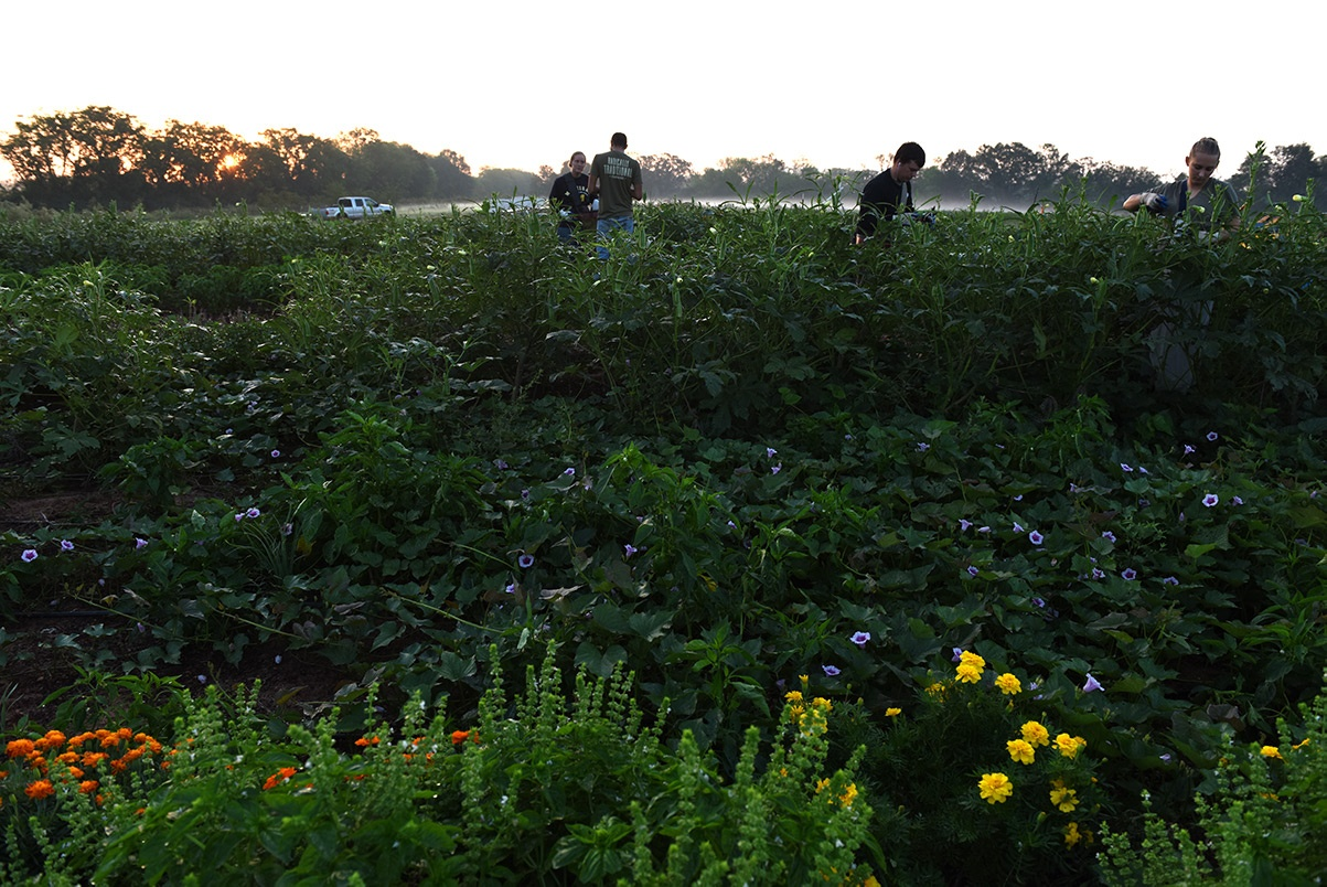 Certified organic no-till-farming at White Oak Pastures