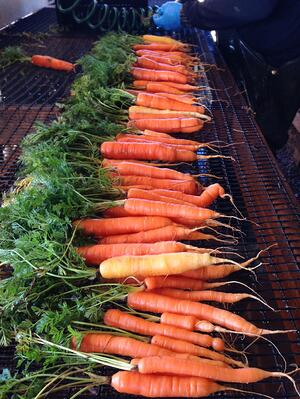Certified organic carrots grown on our farm