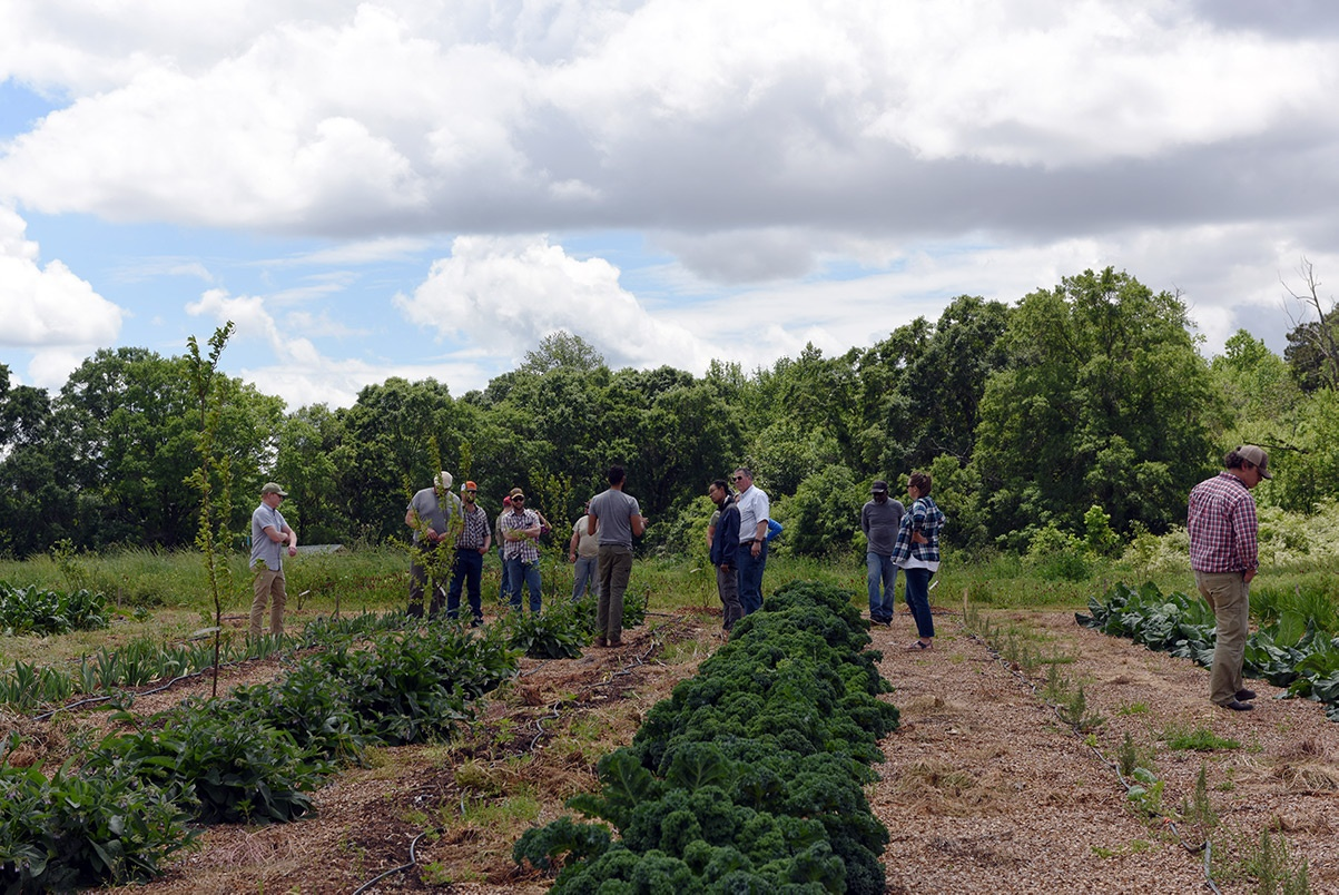 White Oak Pastures organic farming workshops
