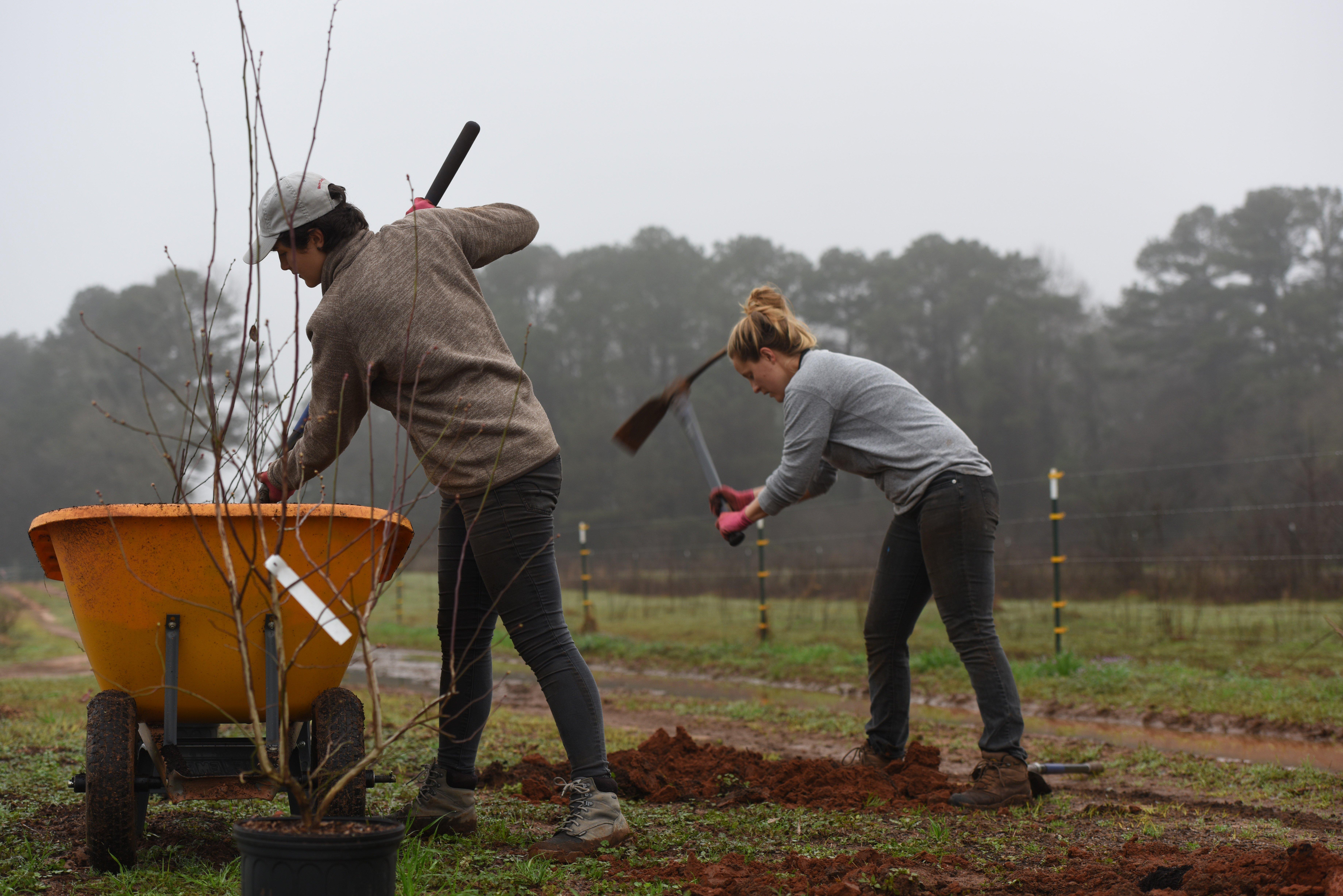 WOP_planting-fruit-trees
