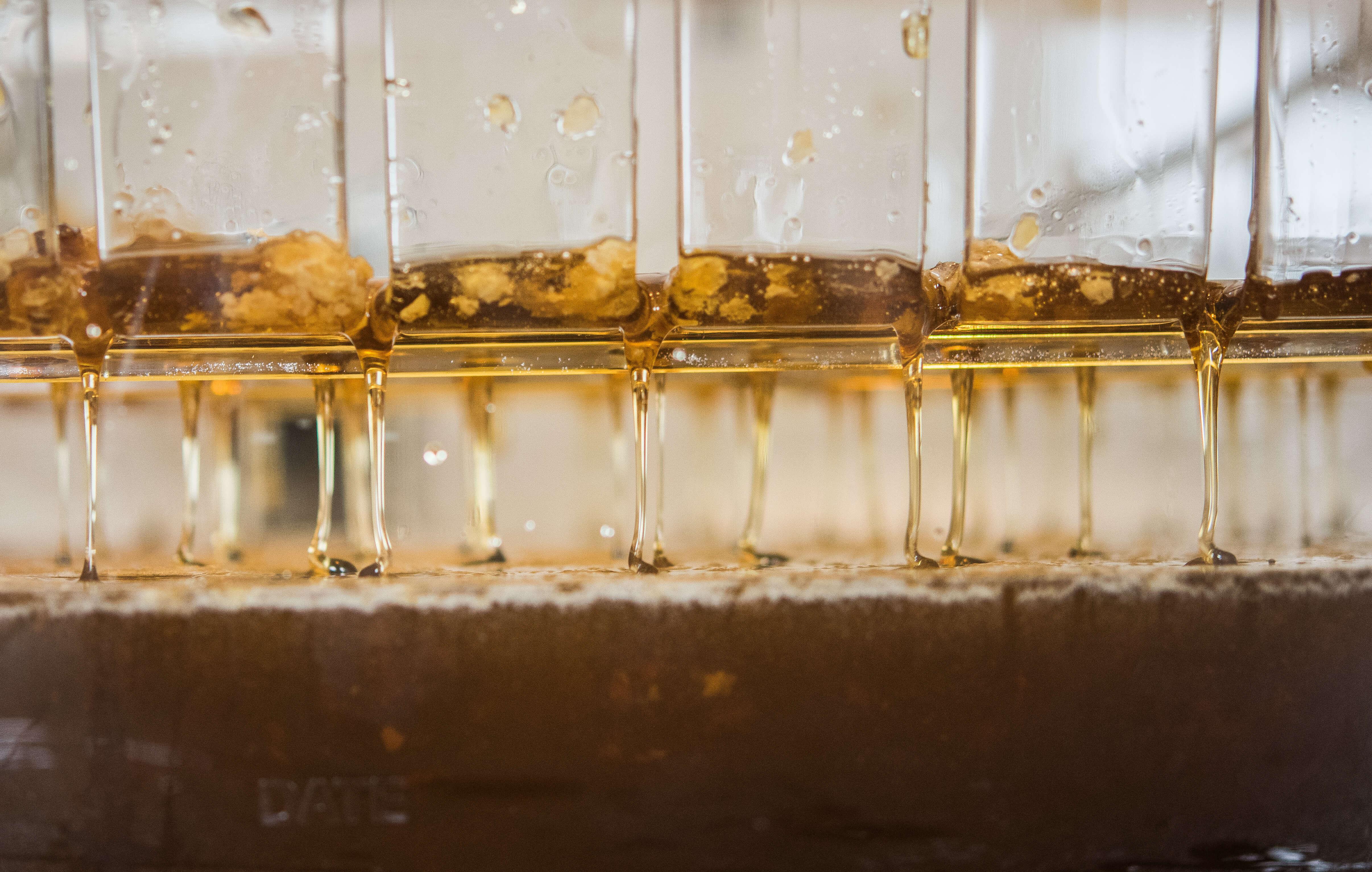 White Oak Pastures honey harvest drip