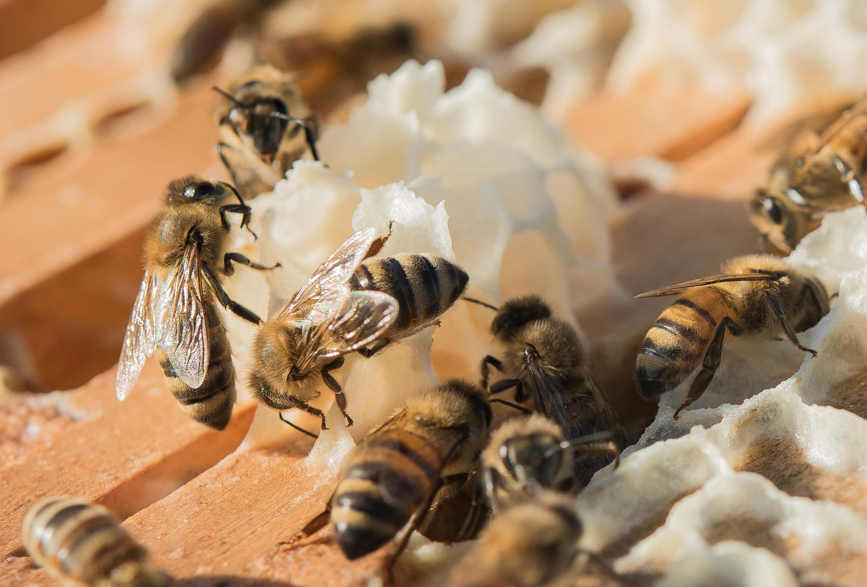 White Oak Pastures honeybees