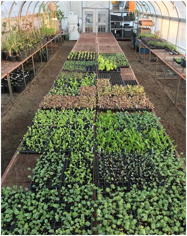 White Oak Pastures Certified Organic Herbs