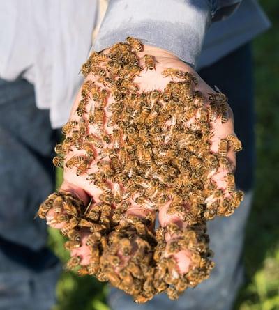 bees on hand wildflower honey