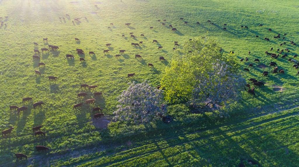 dronetreesunglare-