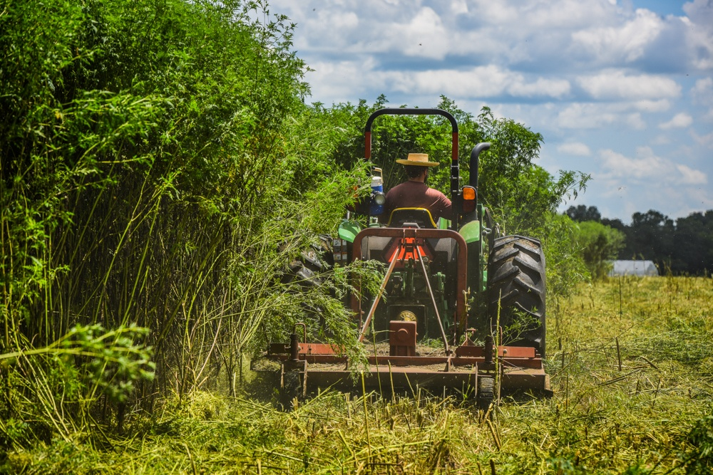 Graham Phillips mowing for laying hens at White Oak Pastures in Bluffton GA.
