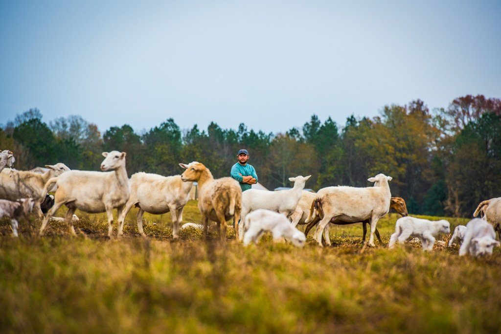 Sheep with Graham of White Oak Pastures