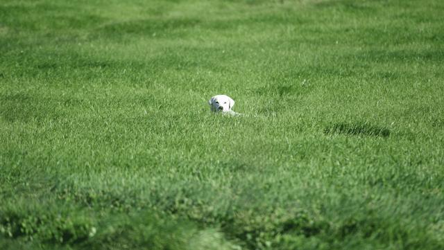 grass-1.png