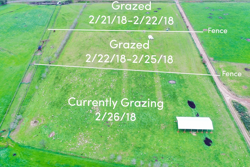 an example of our pasture grazing documentation