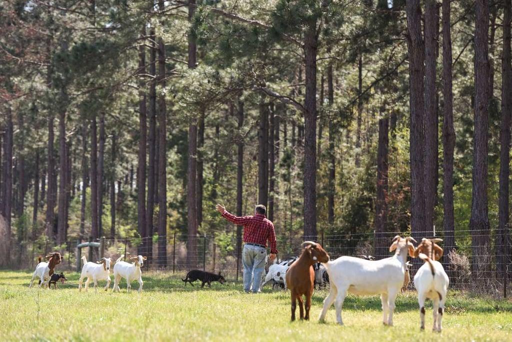 herdingdogs-0115.jpg