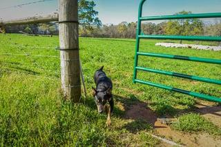 herdingdogs-6156.jpg