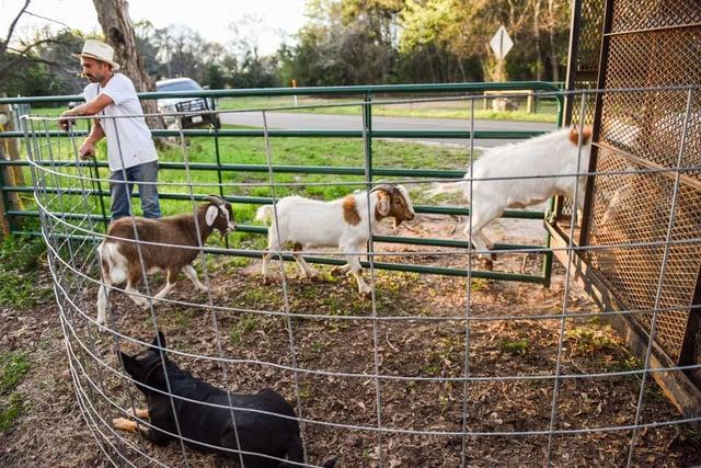 herdingdogs-6279.jpg