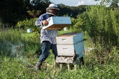 honey-harvest-8-16-2016-31.jpg