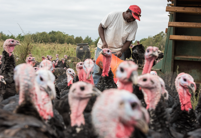 James says the most satisfying part of his job is seeing the turkeys grown.