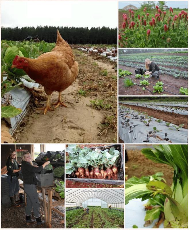 organic spring veg 2.png