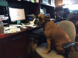 regal-at-desk.jpg