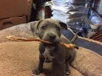 roxi-and-pet-chew.jpg