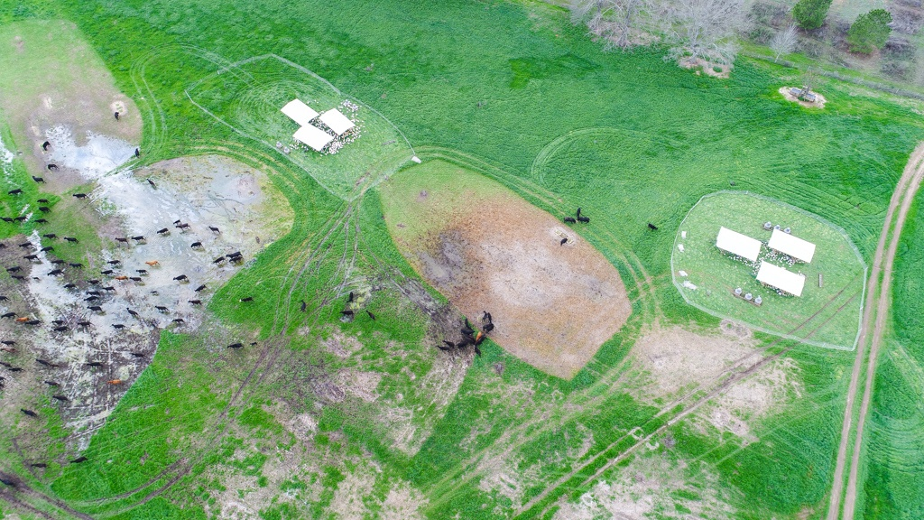 An aerial view of the impact our pastured turkeys and grass-fed cattle have on White Oak Pastures