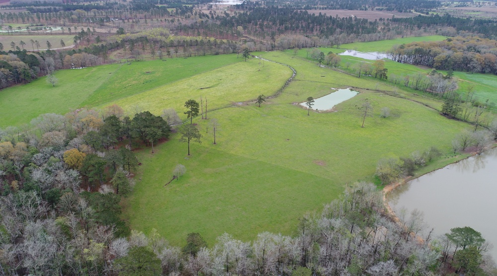 Aerial photo of old sugar cane fields grazed by bulls at White Oak Pastures in Bluffton GA.