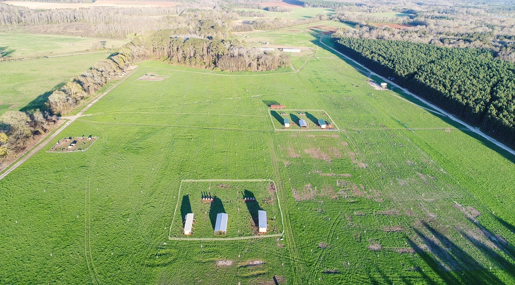 laying hens on pasture from an aerial view
