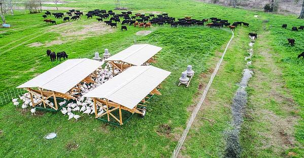 wop-animal-impact-turkeys-cows