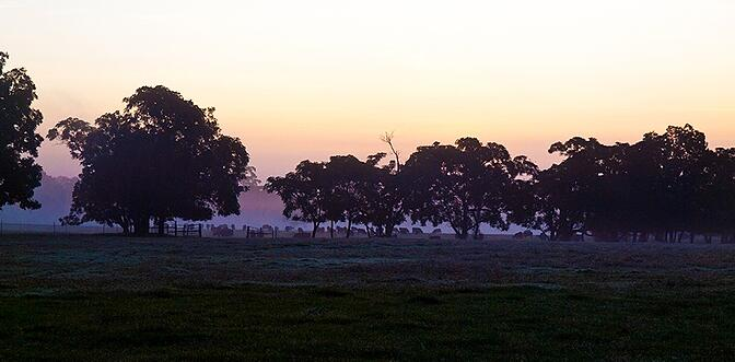Experience White Oak Pastures at dawn