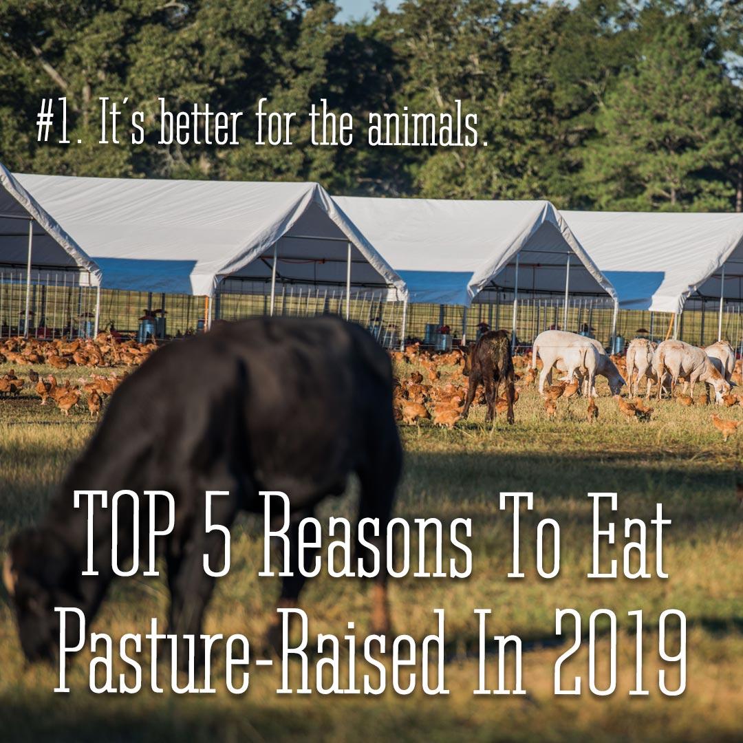 1-Animals-Top-5-Reasons-1080-1